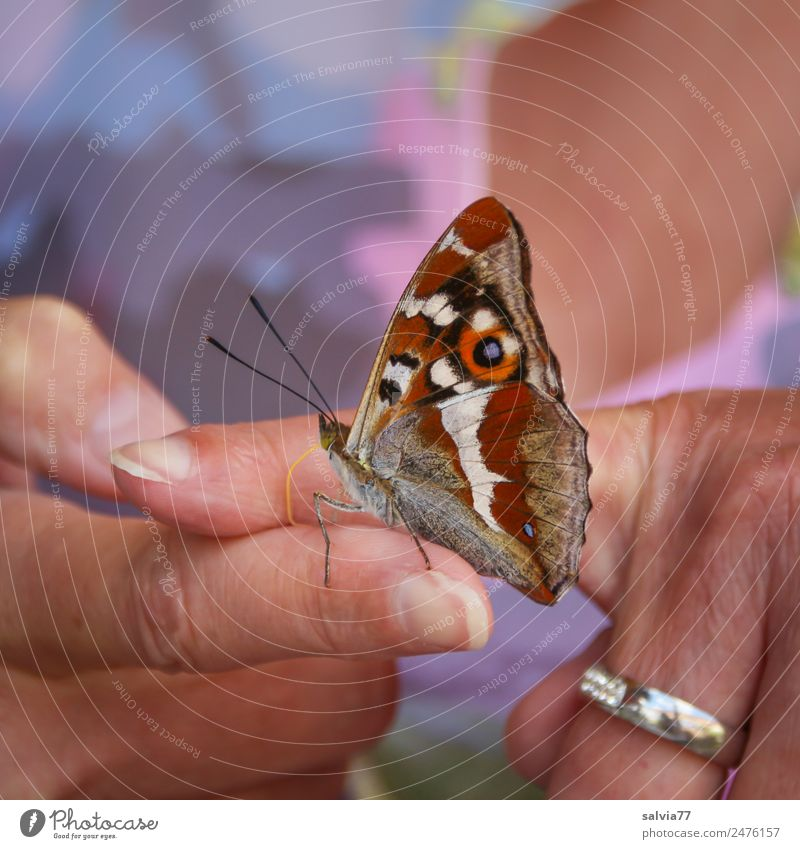Human being Nature Summer Animal Wild animal Esthetic Skin Fingers Cute Insect Trust Butterfly Positive Love of animals Be confident