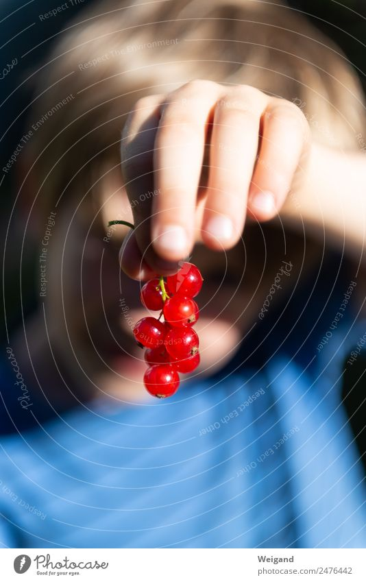 Child Human being Summer Blue Hand Red Healthy Boy (child) Food Playing Fruit Infancy Delicious Harvest Organic produce Toddler
