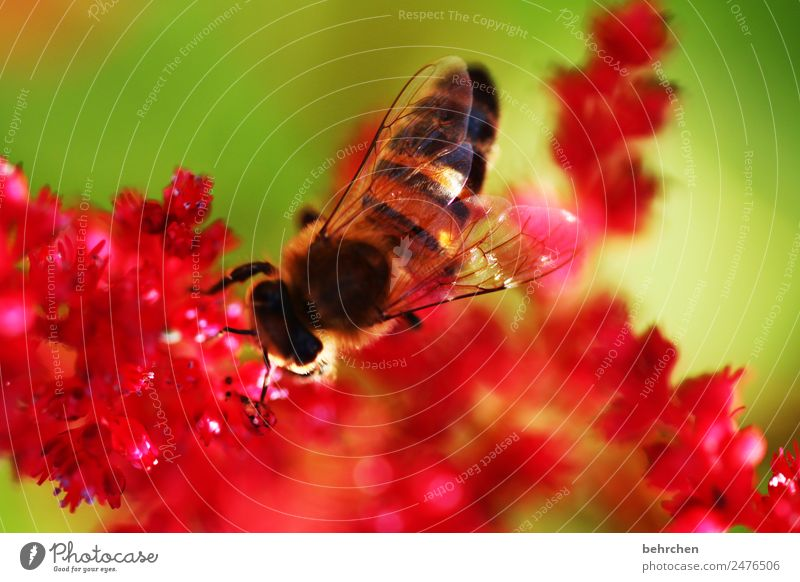 Nature Summer Plant Beautiful Flower Red Animal Blossom Meadow Small Garden Pink Flying Wild animal Blossoming Wing