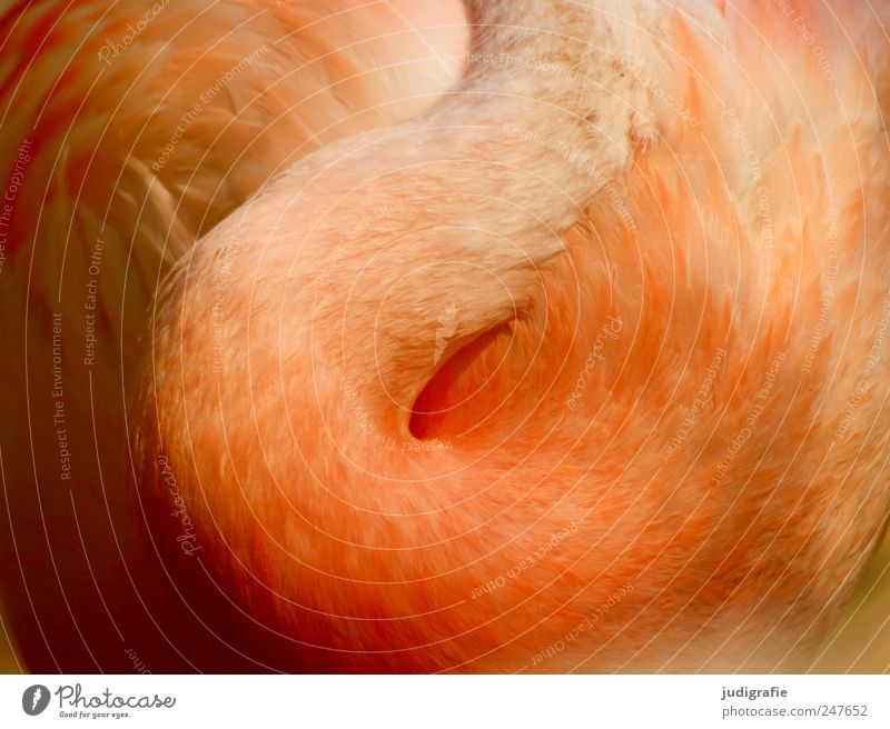 Nature Beautiful Animal Bird Elegant Feather Wild animal Soft Neck Flamingo