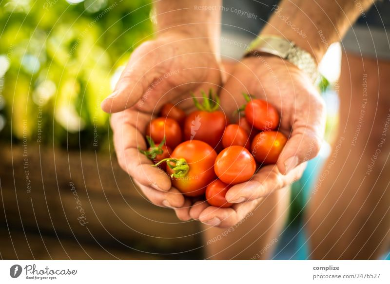 Urban Gardening | Tomato Love Food Vegetable Lettuce Salad Nutrition Eating Picnic Organic produce Vegetarian diet Healthy Eating Living or residing