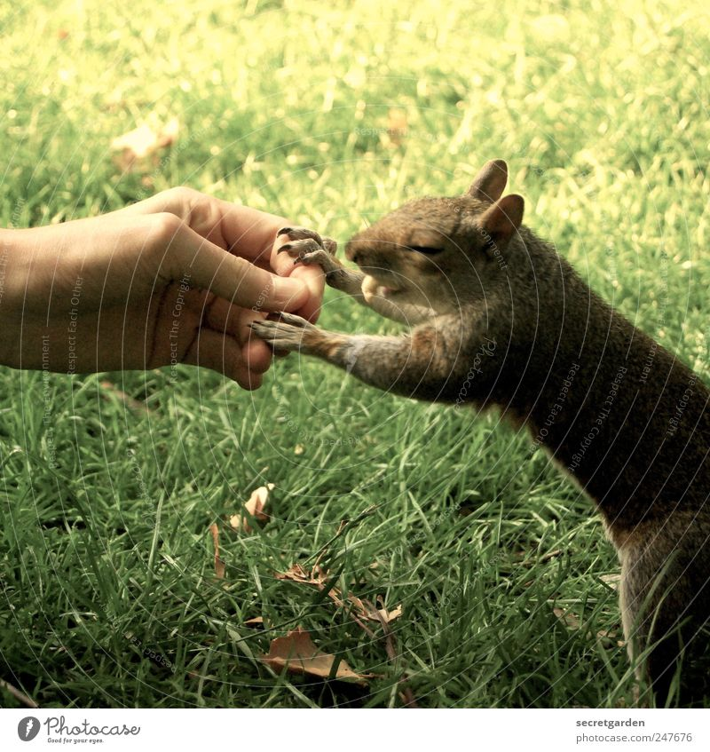 """""""fast"""" food Food Human being Skin Hand Fingers 1 Nature Grass Park Meadow Animal Wild animal Pelt Claw Paw Squirrel Touch To hold on To feed Delicious Brown"""