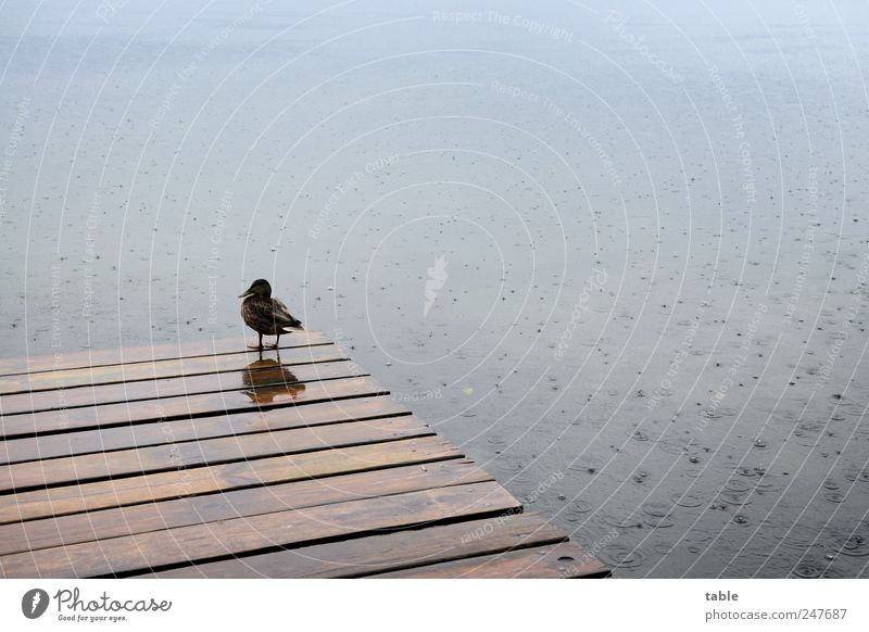 Nature Water Calm Loneliness Animal Dark Emotions Wood Sadness Rain Lake Small Bird Wait Drops of water Stand