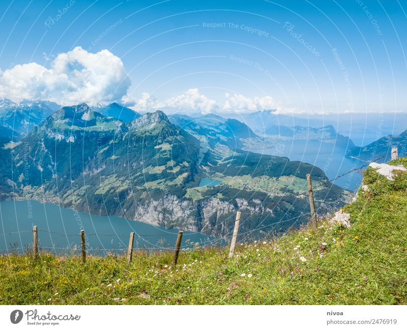 View from Stoos to Lake Lucerne Hiking Environment Nature Landscape Plant Animal Elements Earth Sky Clouds Summer Climate Beautiful weather Tree Grass Mountain