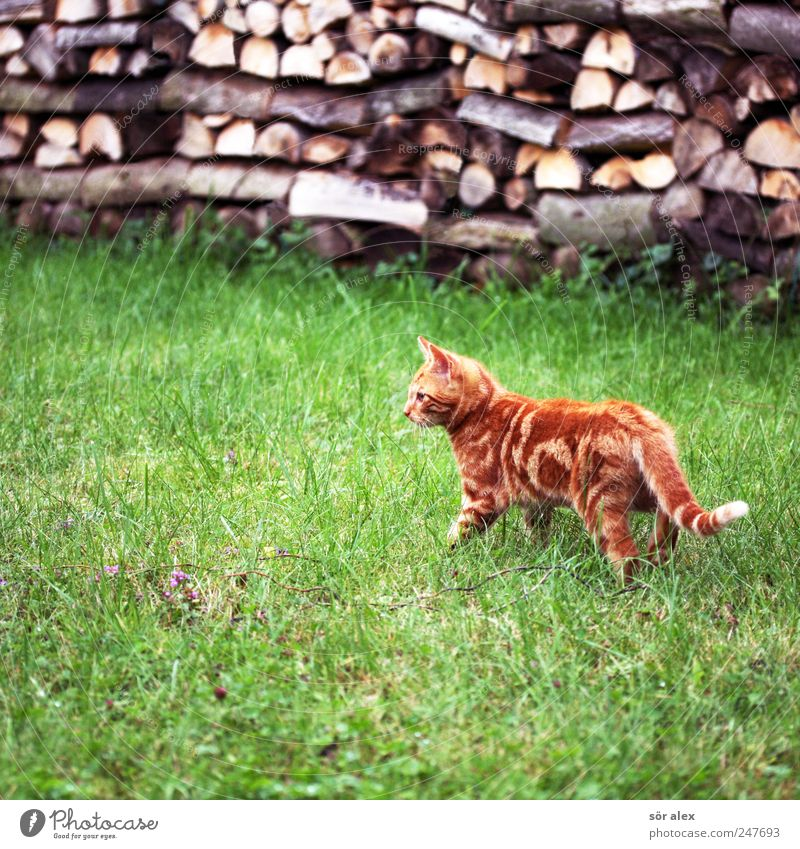 Green Cat Beautiful Animal Meadow Wood Garden Small Orange Baby animal Wait Cute Curiosity Animal face Pelt Concentrate