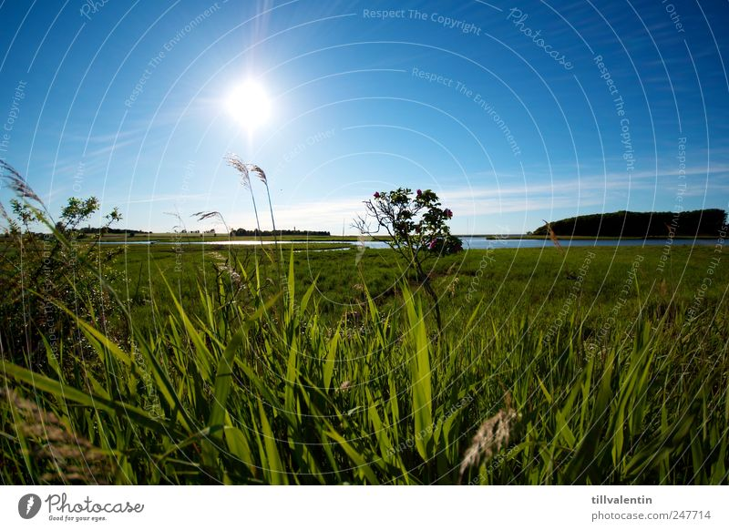 blue. white. green. Environment Nature Landscape Plant Water Sky Horizon Sun Sunlight Summer Climate Beautiful weather Grass Bushes Foliage plant Common Reed
