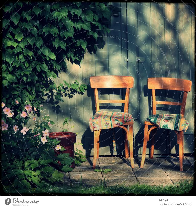 A place for two in the shade Plant Bushes Garden Chair Cushion Wooden wall Blue Brown Green Pink Contentment Trust Safety Safety (feeling of)