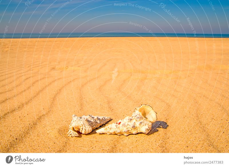 Sandy beach with snails Joy Relaxation Vacation & Travel Summer Beach Animal 2 Yellow Tourism Sea snails Ocean Coast Sky Blue Summer vacation Copy Space
