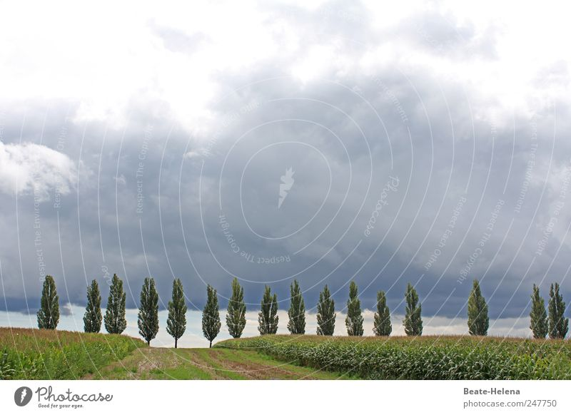 low pressure area Vacation & Travel Trip Summer Nature Landscape Sky Clouds Storm clouds Horizon Tree Agricultural crop Field Lanes & trails Relaxation Threat