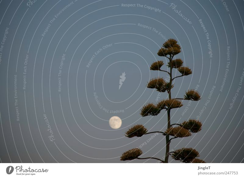 Sky Nature Blue Plant Summer Relaxation Gray Environment Contentment Pink Natural Moon Safety (feeling of) Beautiful weather Foliage plant Cloudless sky