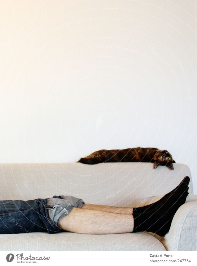 hang out! Masculine Man Adults 1 Human being Jeans Stockings Pet Cat Animal Relaxation To enjoy Lie Sleep Looking Dream Living or residing Uniqueness Thin Legs