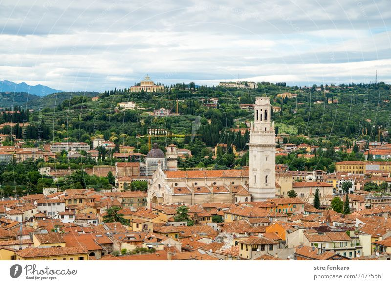Way of life above the rooftops of Verona Vacation & Travel Tourism City trip Summer Forest Hill Alps Mountain Italy Europe Town Old town