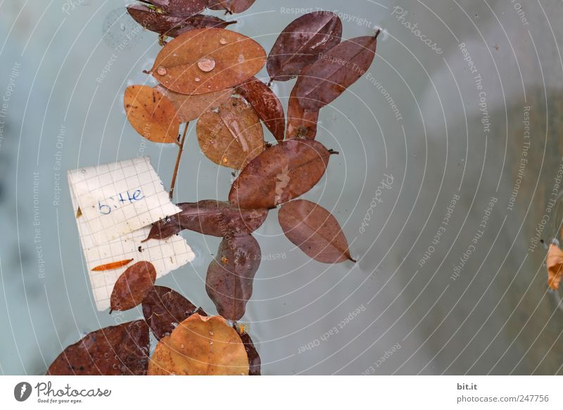 Nature Water Leaf Autumn Environment Brown Wet Paper Climate Characters Communicate Elements Well Desire Seasons Piece of paper