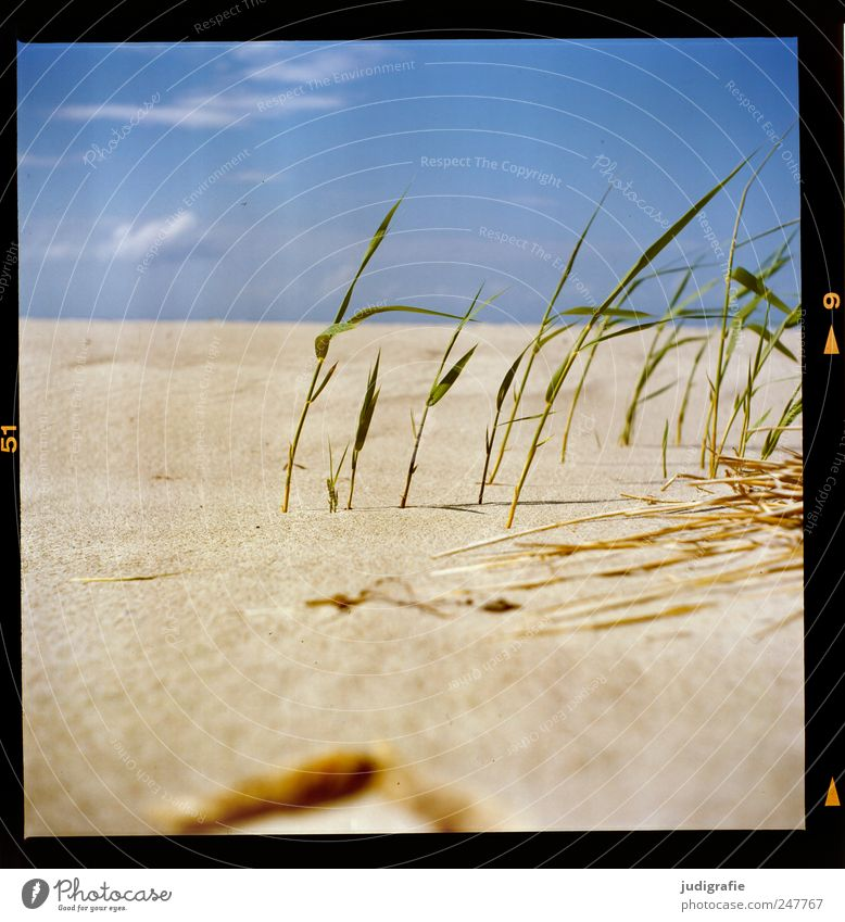 Sky Nature Plant Summer Beach Vacation & Travel Landscape Environment Grass Sand Coast Warmth Growth Perspective Natural Idyll