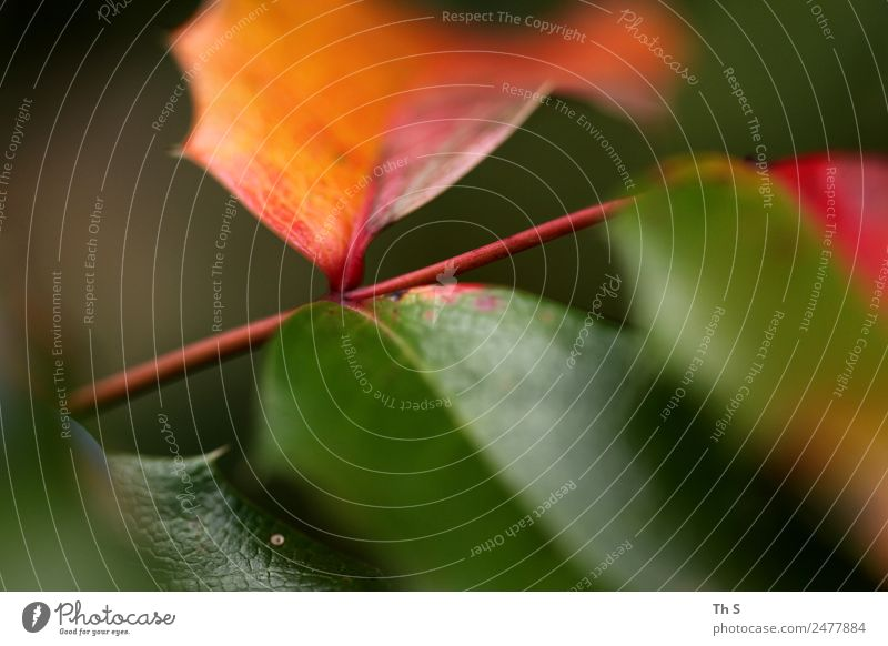 Nature Summer Plant Green Red Leaf Calm Autumn Spring Natural Movement Brown Elegant Fresh Esthetic Happiness