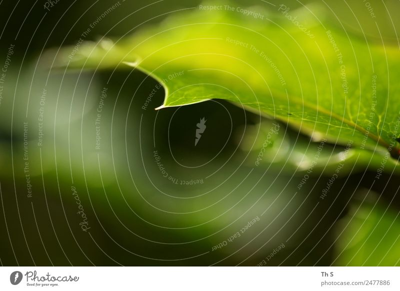 Nature Summer Plant Green Leaf Calm Spring Natural Movement Elegant Fresh Esthetic Authentic Blossoming Uniqueness Point