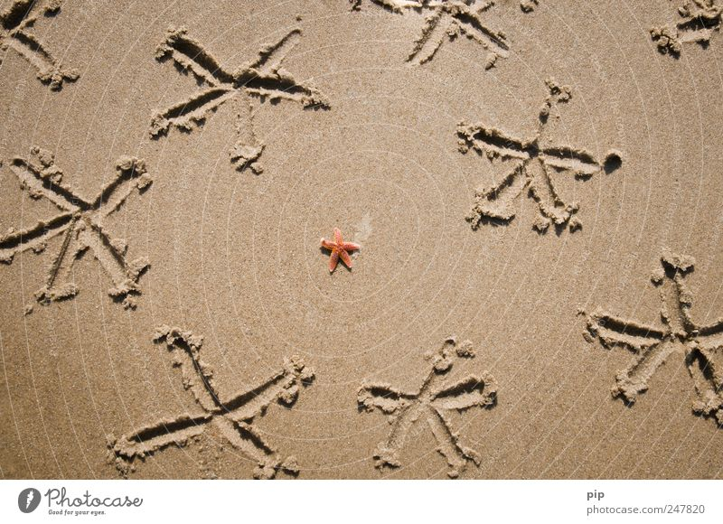 Red Summer Beach Vacation & Travel Ocean Animal Sand Coast Brown Individual Drawing Starfish Vacation mood
