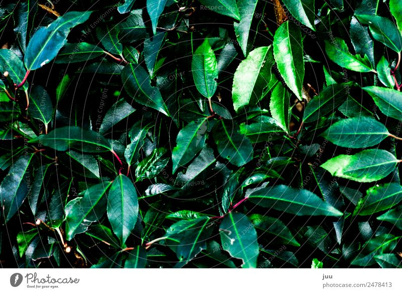 uncontrolled growth Plant Leaf Foliage plant Hedge Growth Dark Glittering Green Pink Colour photo Exterior shot Deserted Night Flash photo Contrast