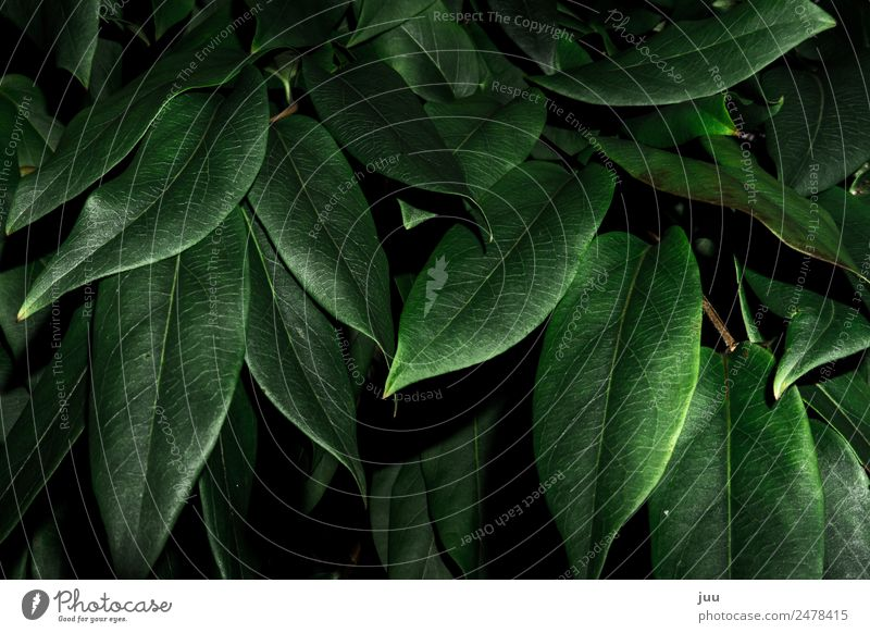 Into the bushes Plant Bushes Leaf Foliage plant Hedge Growth Dark Glittering Green Nature Colour photo Exterior shot Close-up Deserted Night Flash photo