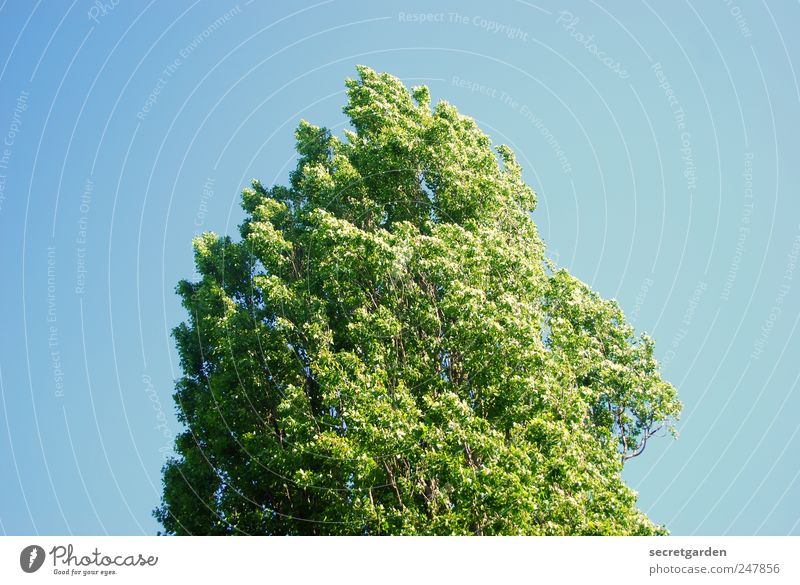 Nature Green Tree Blue Summer Calm Relaxation Environment Spring Wind Simple Beautiful weather Treetop Hissing Center point Minimalistic