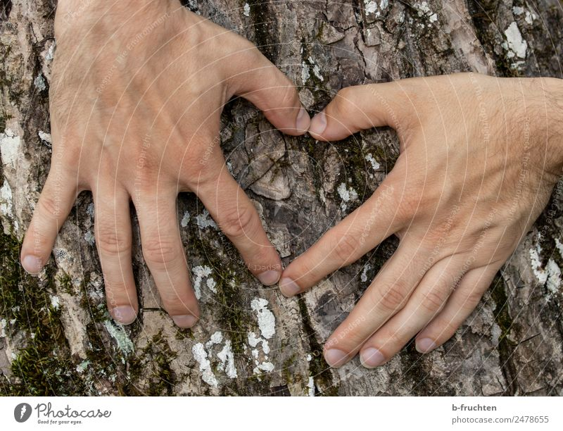 Old love Man Adults Hand Fingers 30 - 45 years Tree Sign Heart Communicate Love Authentic Natural Sympathy Friendship Infatuation Romance Religion and faith