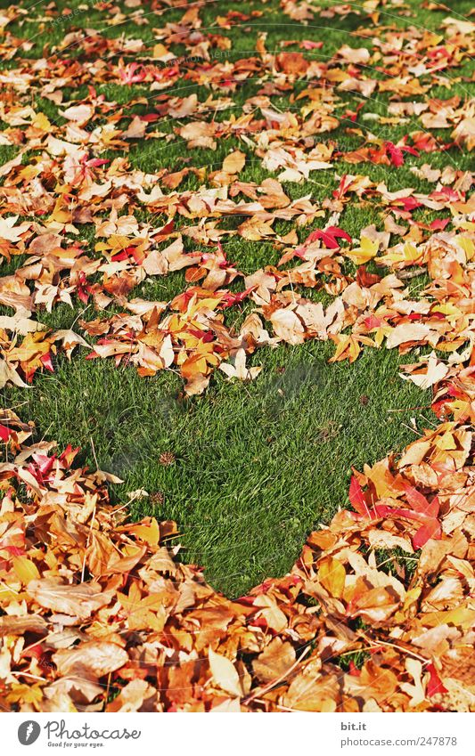 Nature Vacation & Travel Green Relaxation Calm Leaf Environment Meadow Autumn Happy Feasts & Celebrations Friendship Decoration Climate Birthday Heart