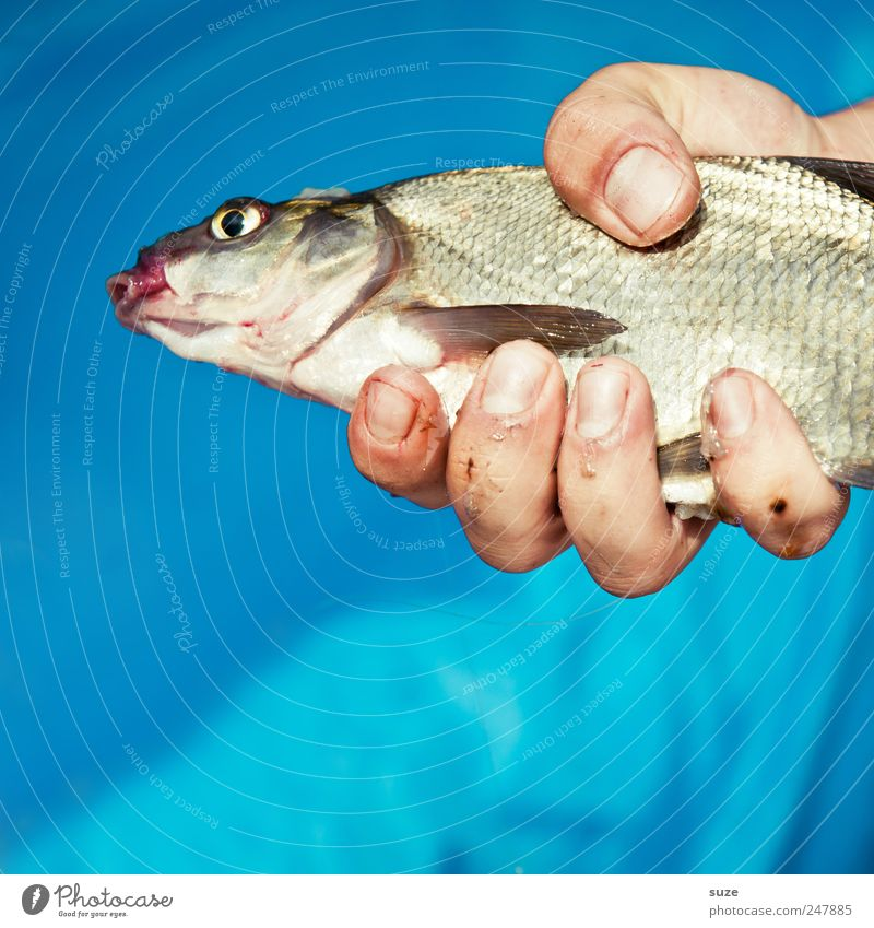 Hand Blue Animal Leisure and hobbies Fingers Fish To hold on Fishing (Angle) Fishery Prey