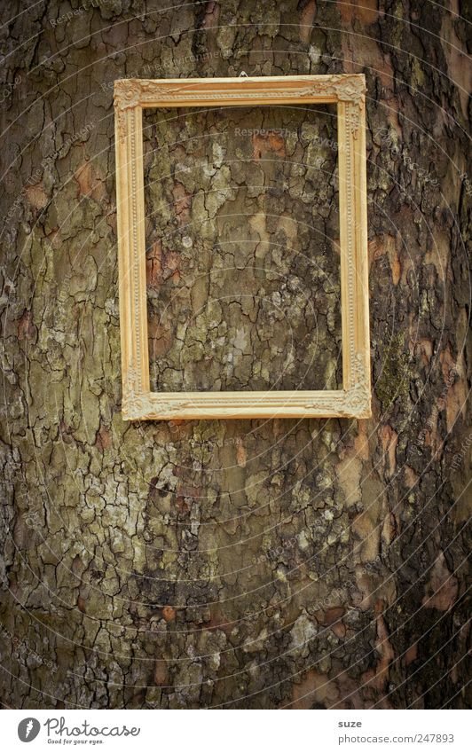 picture Tree Hang Gold Picture frame Image Tree trunk Royal Noble Frame Empty Tree bark Forget Colour photo Subdued colour Exterior shot Close-up
