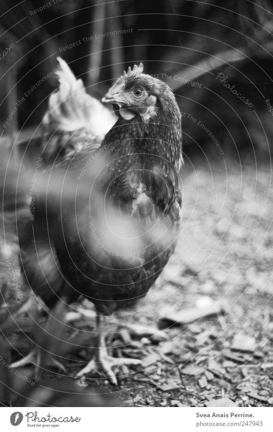 Plant Animal Animal face Curiosity Observe Zoo Pelt Beautiful weather Interest Barn fowl Claw Farm animal