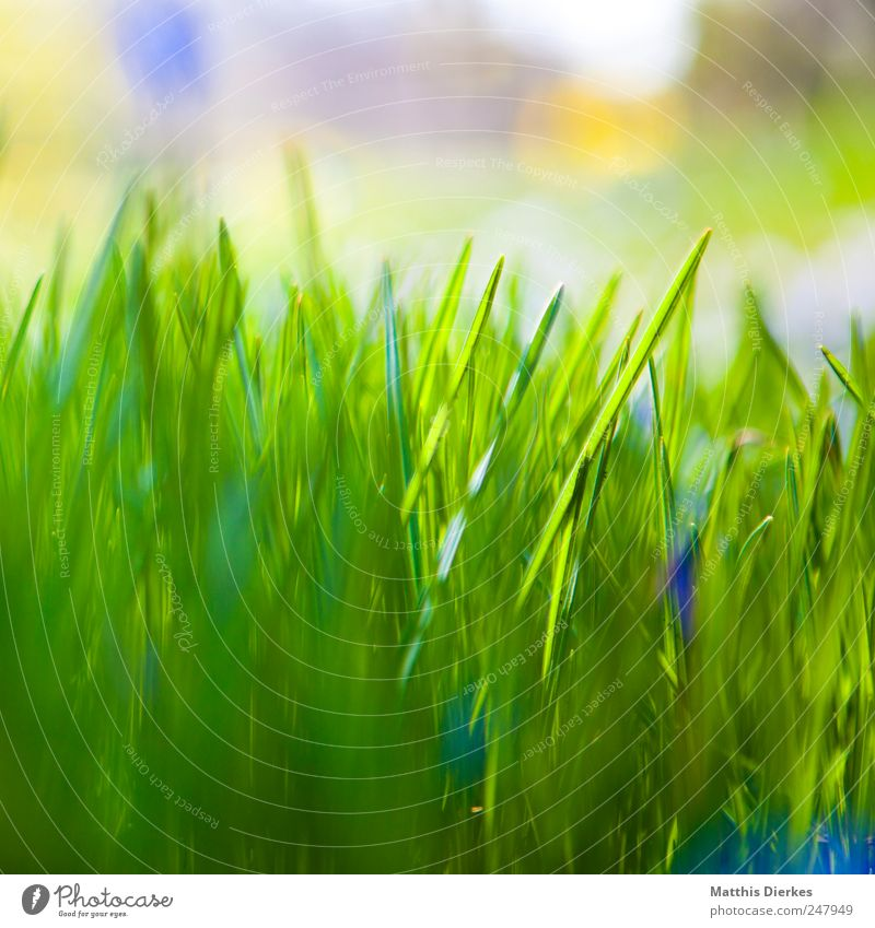grass Environment Esthetic Grass Meadow Nature Ecological Beautiful Green Foliage plant Blur Shallow depth of field Stalk Window box Colour photo Exterior shot