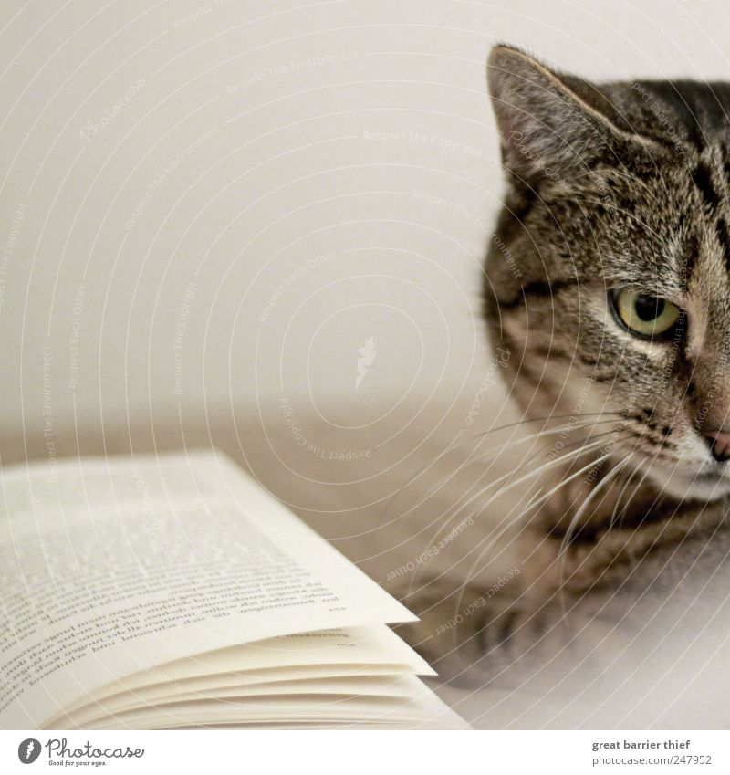 Cat Book Animal Hair Pet Animal face 1 Looking Exceptional Curiosity Love of animals Pelt Cat eyes Colour photo Interior shot Close-up Deserted Day Contrast