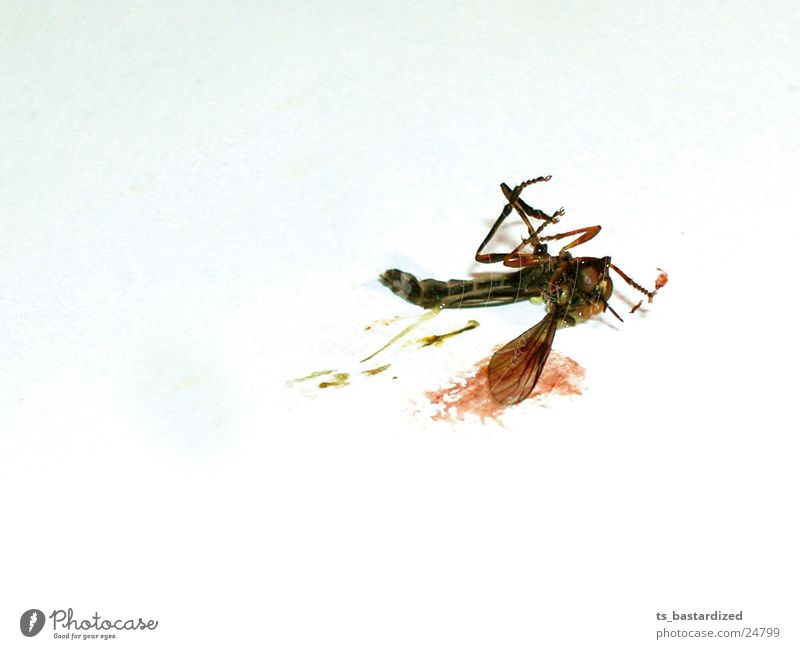 dead mosquito... your own fault Mosquitos Mucus Transport Death End New