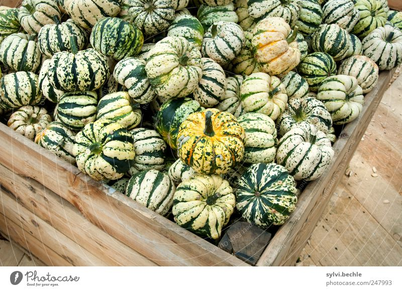 Harvest Time Food Vegetable Nutrition Vegetarian diet Autumn Box Wood Delicious Round Brown Green Offer Sell Pumpkin Pumpkin time Many pumpkin exhibition