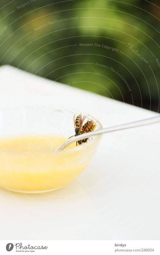 At table brothers and sisters Honey Bowl Spoon Wasps 3 Animal To feed Threat Yellow Green White Love of animals Hospitality Dangerous Nutrition Nuisance Sweet