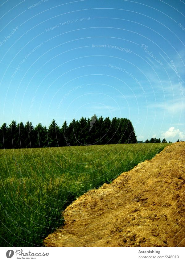 Astonishing landscape Environment Nature Landscape Plant Air Sky Clouds Summer Weather Beautiful weather Tree Grass Meadow Forest Blue Brown Yellow Green