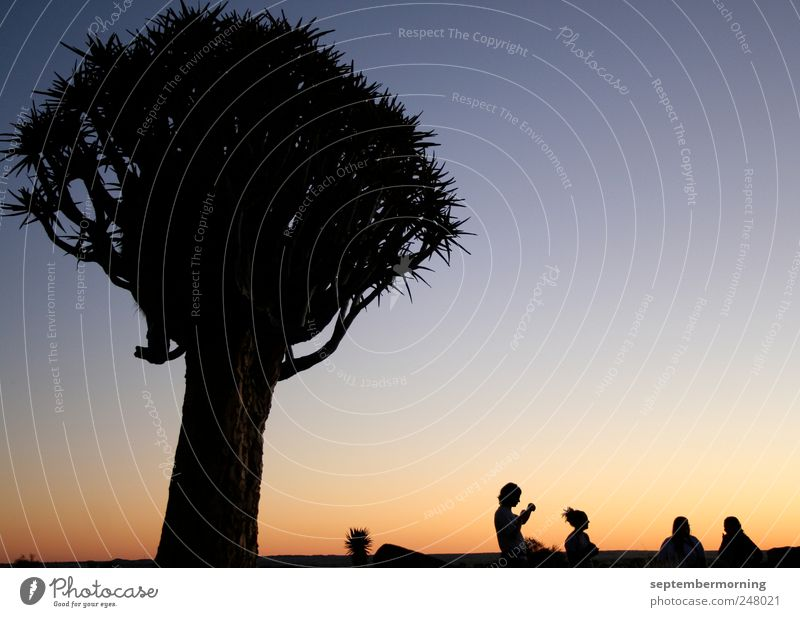 shadow play Vacation & Travel Human being 4 Tree Relationship Stagnating Colour photo Exterior shot Twilight Light Shadow Contrast Silhouette Sunrise Sunset