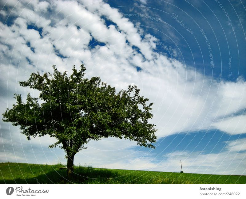 Sky Nature Old White Green Tree Blue Beautiful Plant Summer Clouds Leaf Meadow Landscape Grass Environment