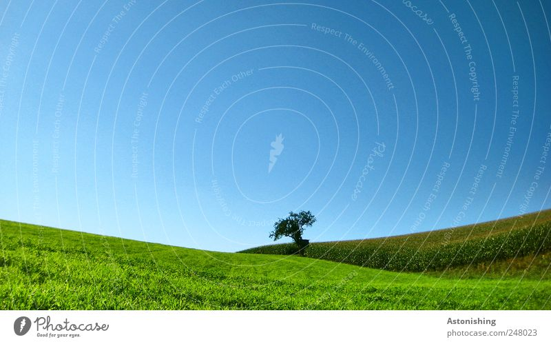 Sky Nature Blue Green Tree Plant Summer Meadow Environment Landscape Grass Air Weather Field Horizon Earth