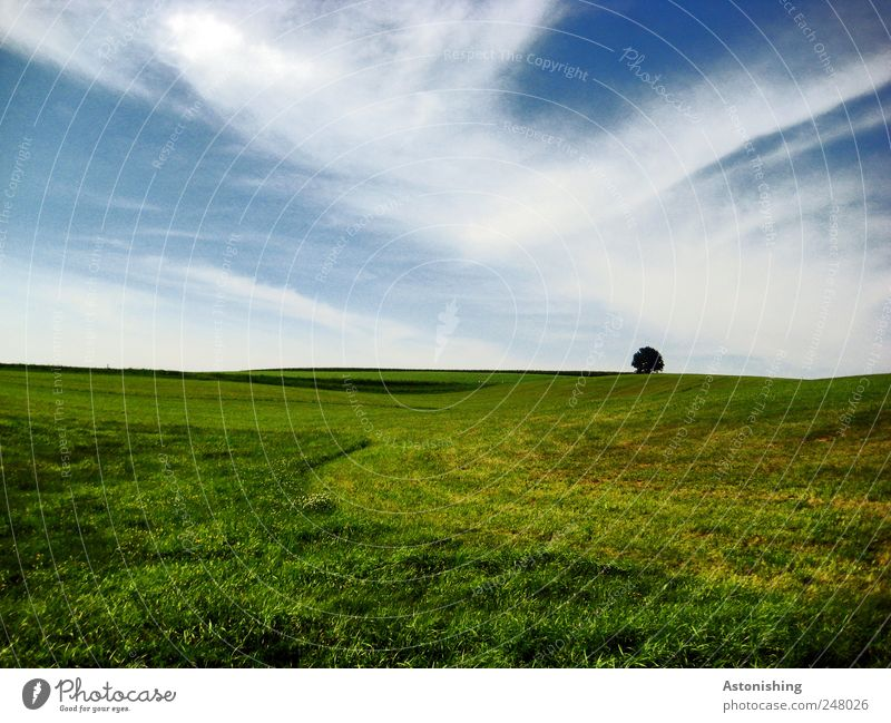 Alone Environment Nature Landscape Plant Earth Air Sky Clouds Summer Weather Beautiful weather Grass Meadow Hill Blue Green White Grass surface mill district