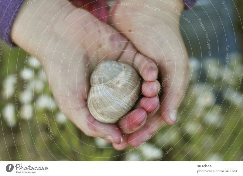 in my hands ... Child Infancy Mussel Fingers Human being 3 - 8 years Carrying To hold on Hand Meadow Flower Snail Snail shell Inhabited Nature Colour photo