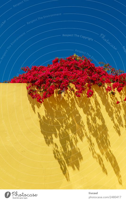 red flowers on yellow wall, portugal Sky Nature Blue Plant Flower Red House (Residential Structure) Street Architecture Yellow Spring Building Art Garden