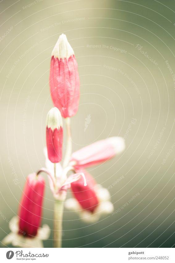 for you Nature Plant Flower Leaf Blossom Wild plant Exceptional Positive Beautiful Pink Red Joie de vivre (Vitality) Esthetic Uniqueness Exotic Colour Retro