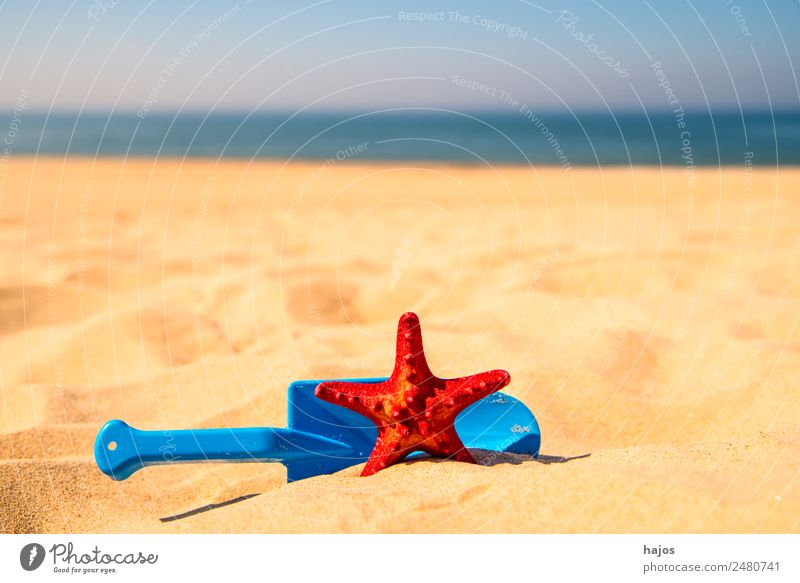 Toy shovel with starfish on a beach Joy Relaxation Vacation & Travel Summer Beach Child Sand Baltic Sea Animal 1 Blue Yellow Red Tourism Sandy beach Ocean