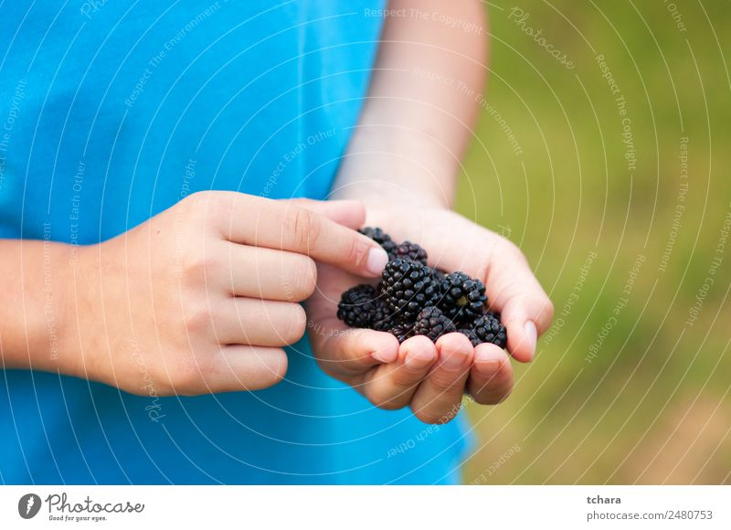 Ripe blackberries in a child hand Food Fruit Dessert Eating Breakfast Vegetarian diet Diet Hand Nature Fresh Delicious Natural Juicy Green Black Colour