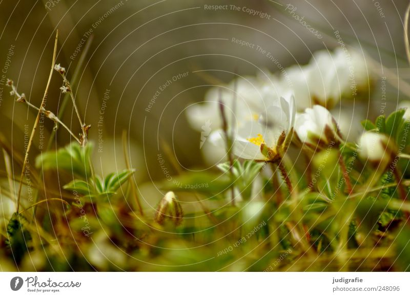 Nature Beautiful Plant Life Environment Blossom Moody Small Growth Delicate Iceland Wild plant