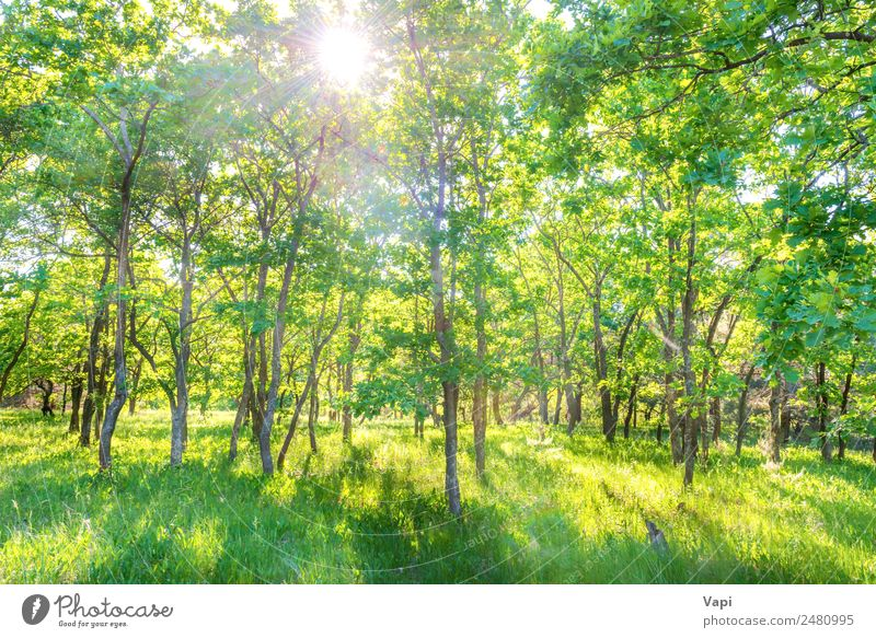 Panoramic landscape with green forest Nature Summer Plant Beautiful Green Landscape Sun White Tree Leaf Forest Dark Black Yellow Environment Spring