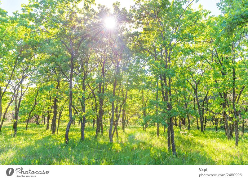 Landscape with green forest Beautiful Summer Sun Environment Nature Plant Sunrise Sunset Sunlight Spring Beautiful weather Tree Grass Bushes Leaf Foliage plant