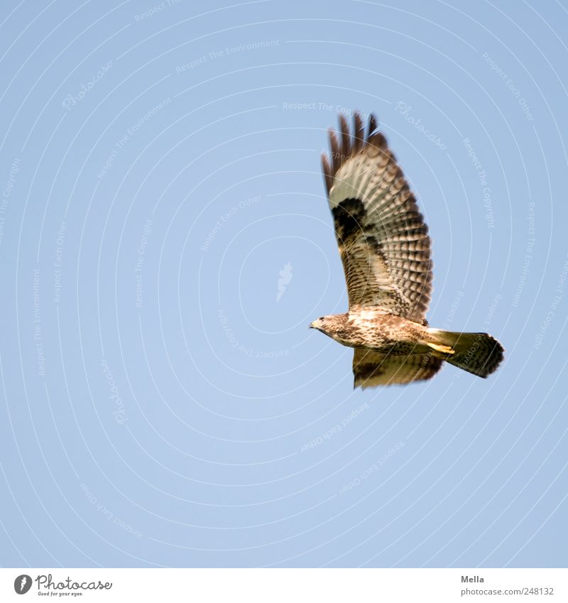 Sky Nature Animal Freedom Environment Movement Air Bird Flying Large Esthetic Natural Feather Wing Bird of prey