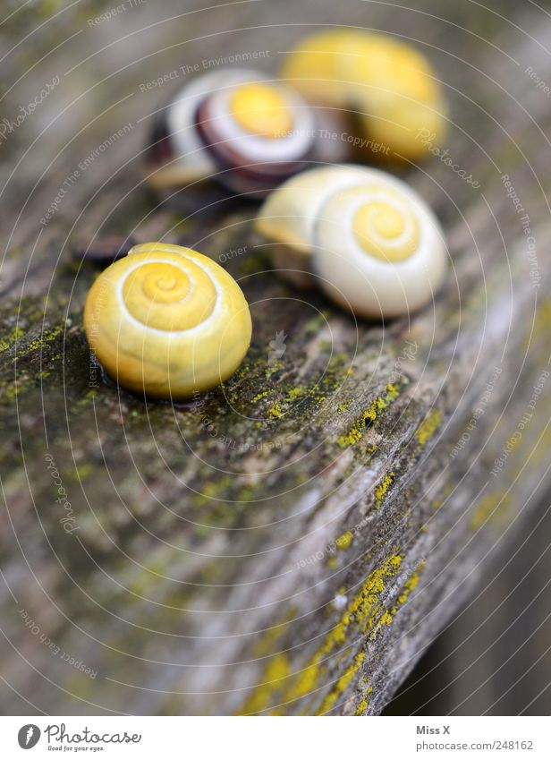 Diegos snail family Animal Snail 4 Group of animals Slimy Yellow Slowly Snail shell Wood Garden Tree trunk Colour photo Multicoloured Exterior shot Close-up