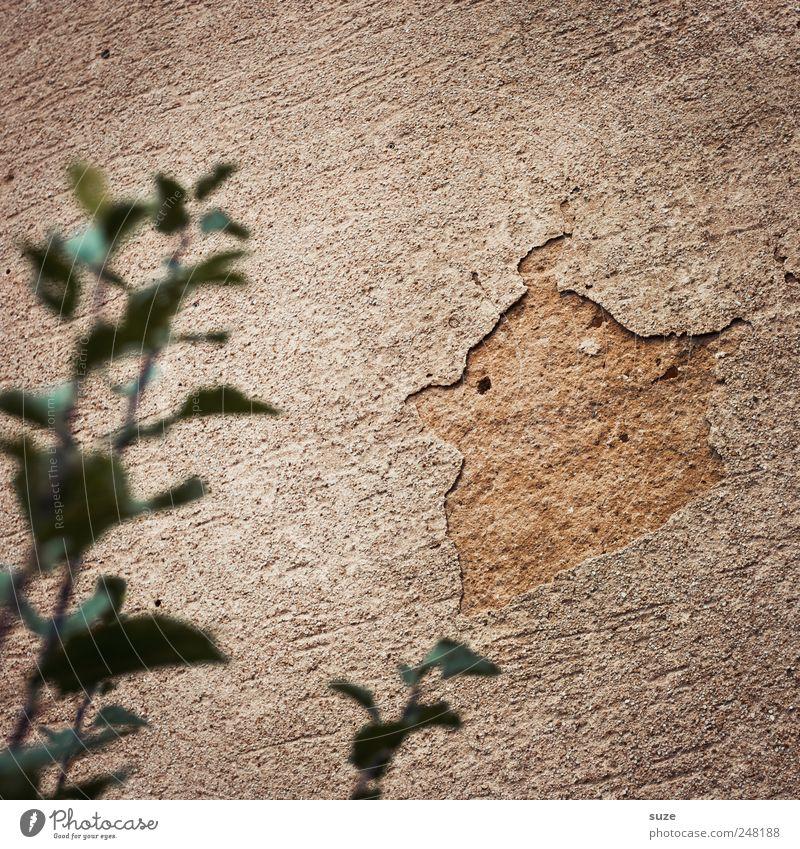 Old Green Plant Leaf Wall (building) Brown Bird Funny Dirty Broken Bushes Plaster Dismantling Fantasy